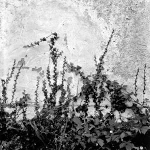 El valle invisible 06